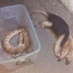 Tamanduá, cobra e cachorro do mato são encontrados mortos em SJB