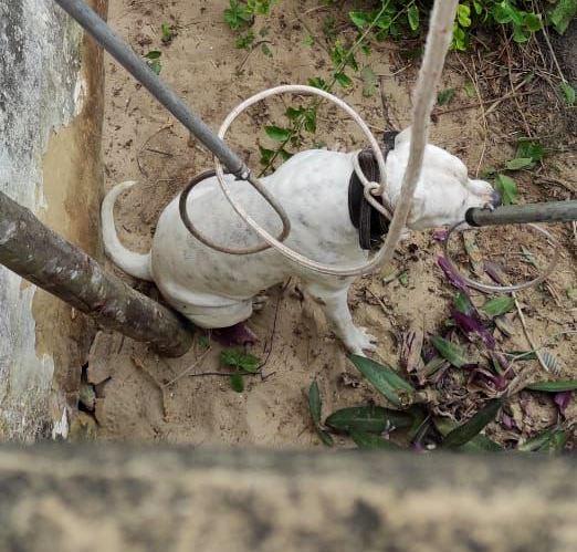 Cachorro é salvo pelo Corpo de Bombeiros e Guarda Civil em SJB